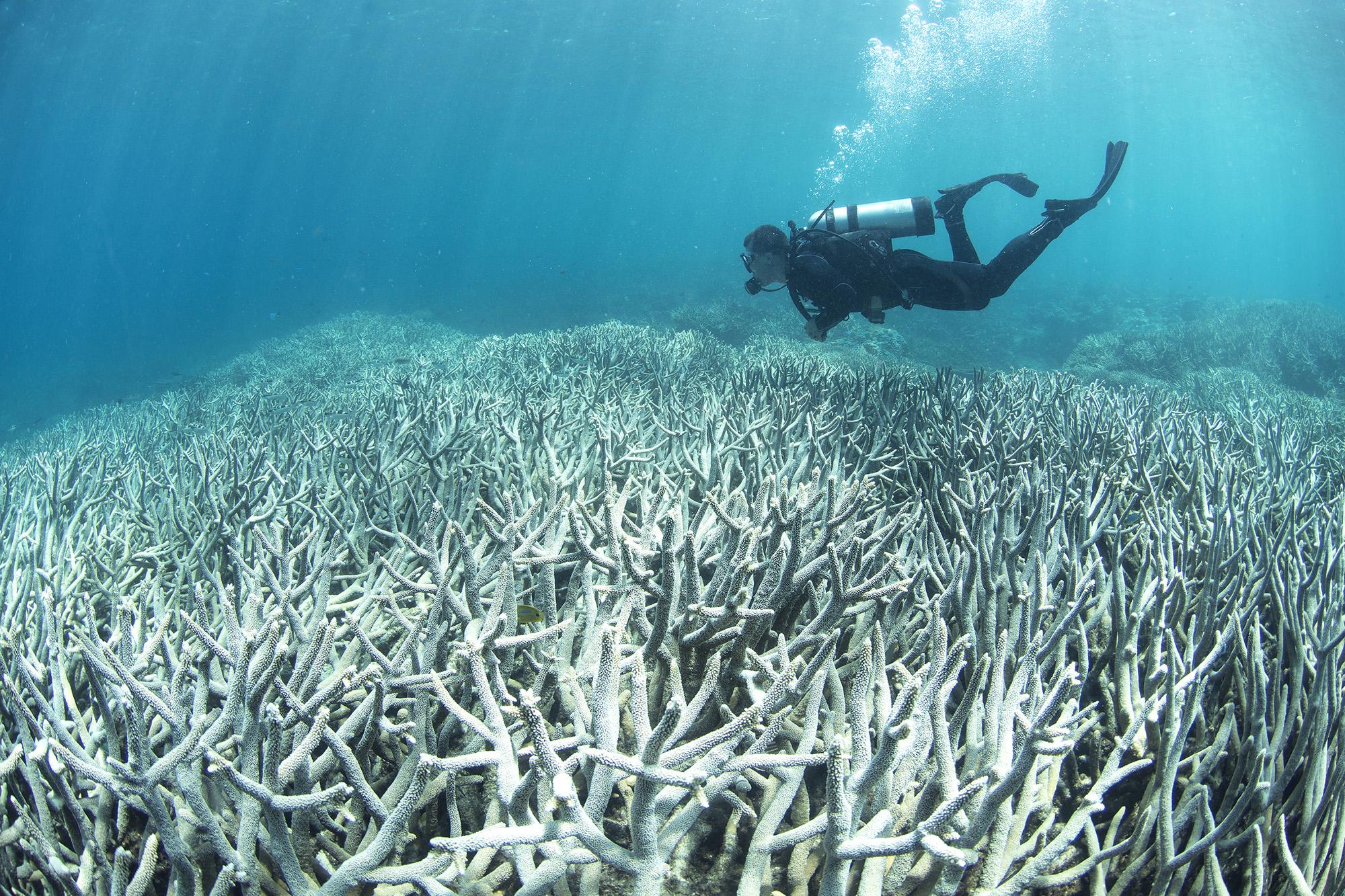 大堡礁出現漂白現象 (圖:Slate)