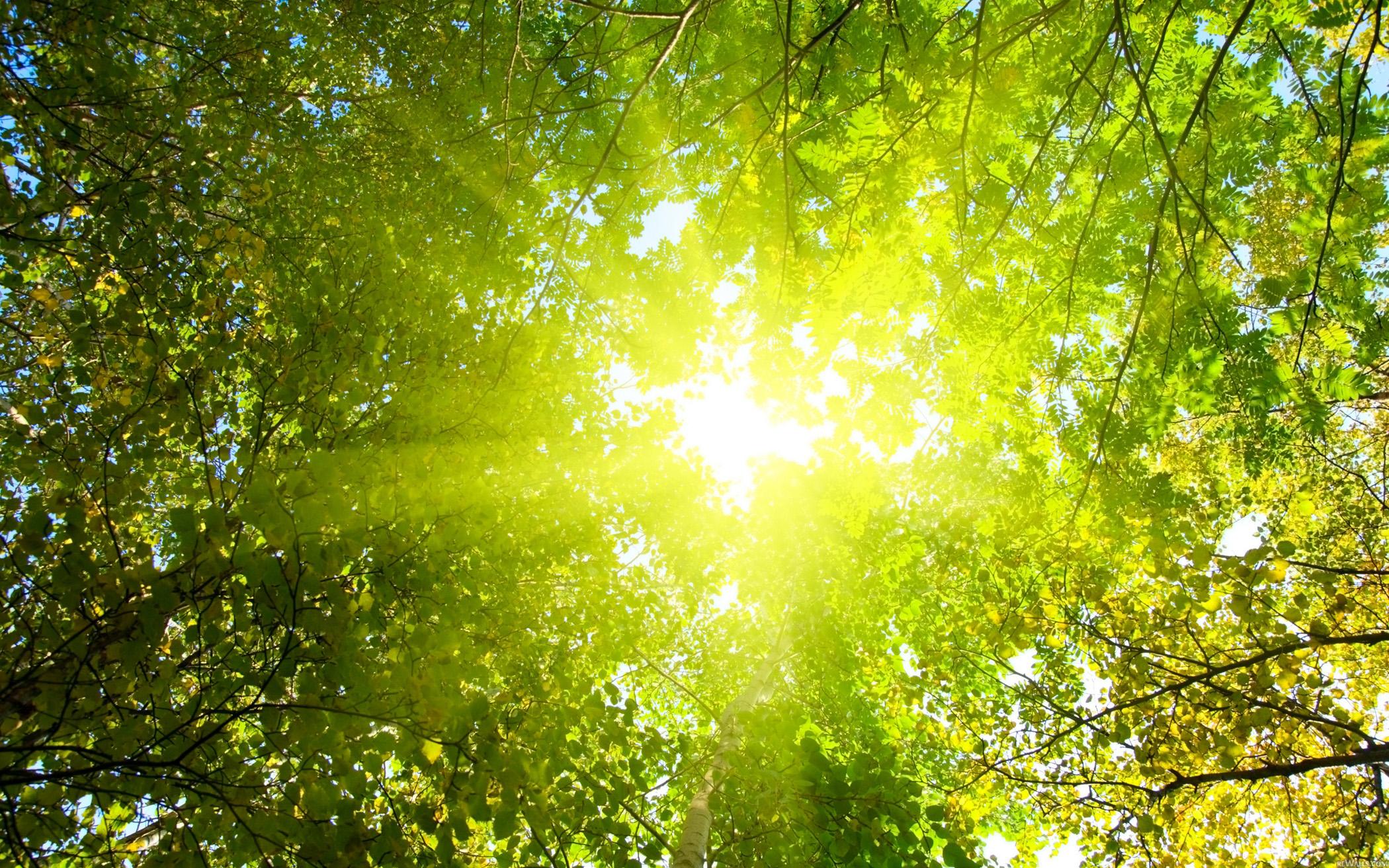 人造樹葉二氧化碳