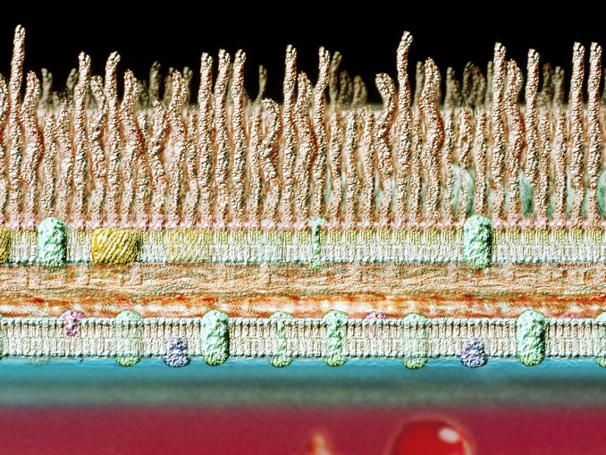 血液休眠細菌