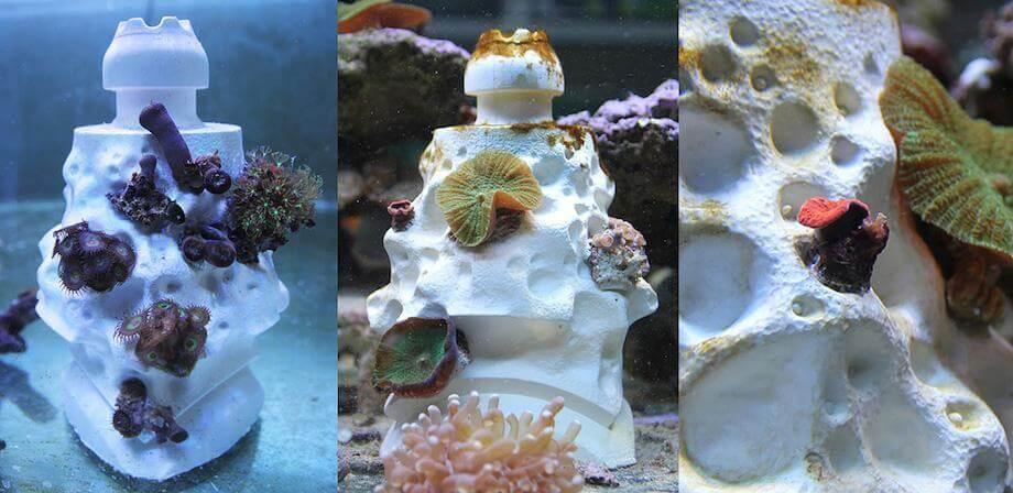 在海中浮游的幼年珊瑚,會依附在人造珊瑚礁上生長 (圖:RDL)